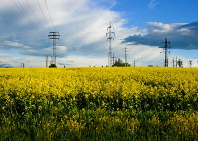 Yellow meadow, electrical cables, and a cloudy, blue sky near Prague, Czech Republic.